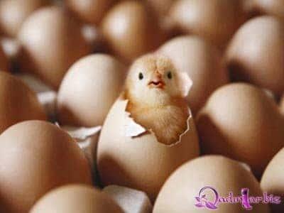 Yumurta güc, enerji və protein mənbəyidir