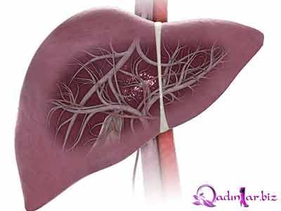 Qara ciyər – çox vacib orqandır