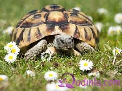 Tısbağa yumurtası faydaları və zərərləri